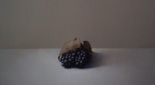 Paul Riley Wine Grapes